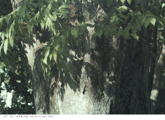 나무-1411.jpg